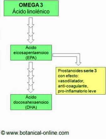 metabolismo de las grasas omega