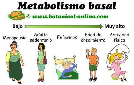 Tipos de metabolismo y necesidades de metabolismo basal