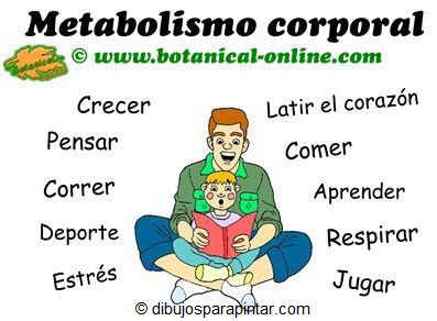 metabolismo corporal