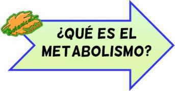 definicion metabolismo