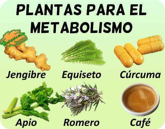 plantas medicinales acelerar metabolismo