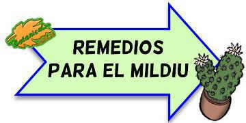remedios mildiu