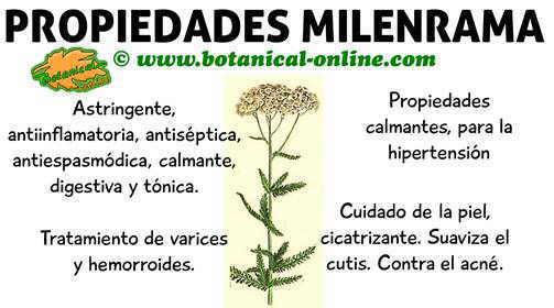 propiedades de la milenrama, planta medicinal