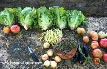 Verduras huerto