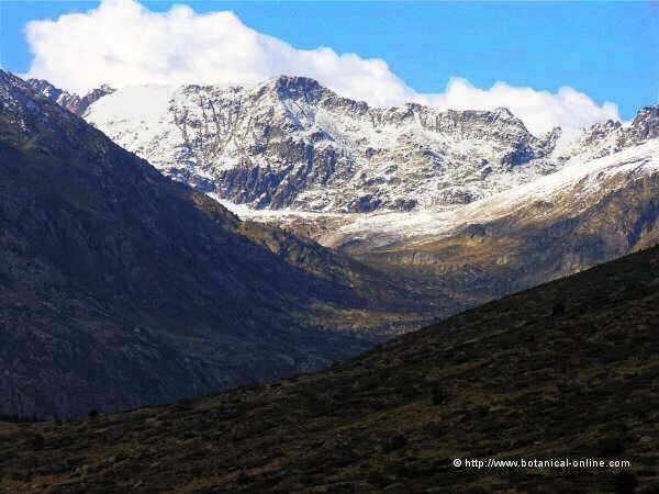 montana-nieve