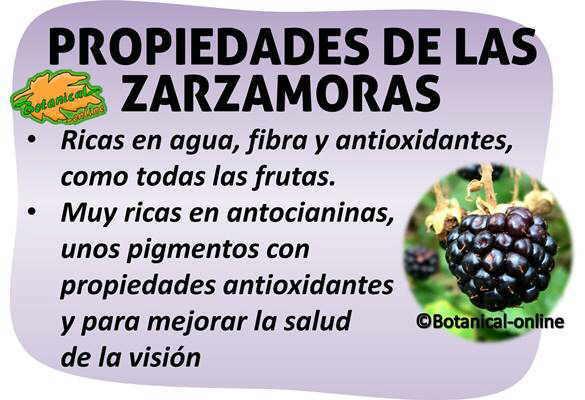 propiedades medicinales alimentarias de las moras o zarzamoras