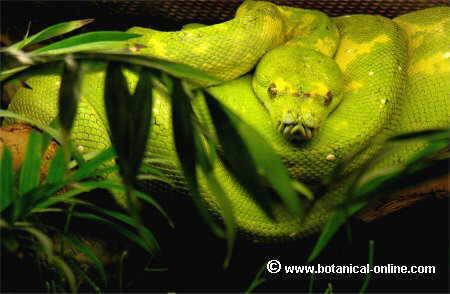 Vida de las serpientes