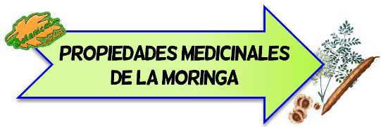 propiedades medicinales de la moringa