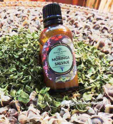 Moringa oil, with dried leaves and tree seeds