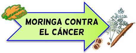 moringa contra el cáncer
