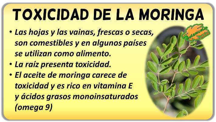 toxicidad de la moringa oleifera