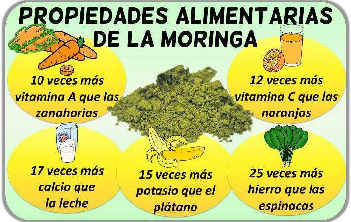 propiedades alimenticias moringa vitaminas minerales powder hojas