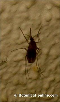 mosquito sangre