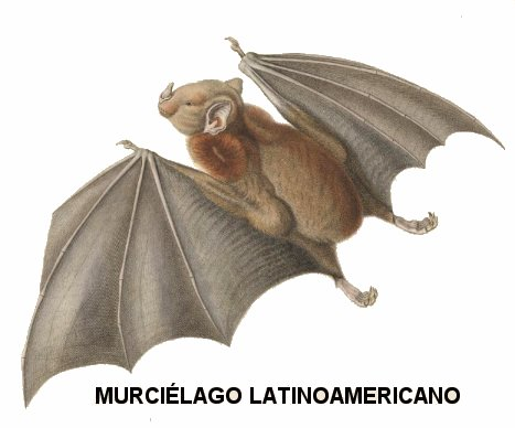 Insectvoros sudamericanos