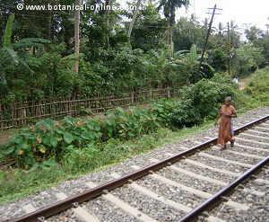 mujer caminando en la vía