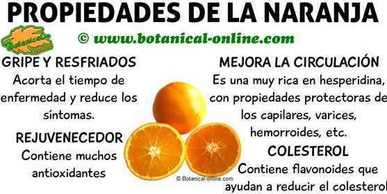 Propiedades de la naranja y beneficios