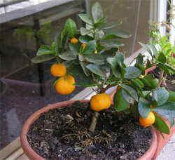 Como cultivar verduras y hortalizas en el jard n for Cultivo de verduras en casa