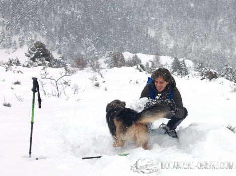 jugar perro en la nieve
