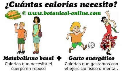 Cómo calcular cuantas calorías necesito al día en dieta equilibrada, metabolismo basal y gasto energetico