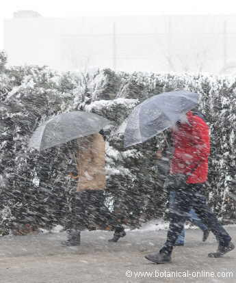El frío intenso puede producir picor en el cuerpo