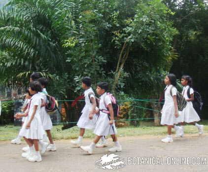 niños niñas escuela sri lanka