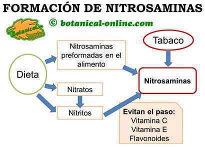 Esquema de las fuentes de nitrosaminas