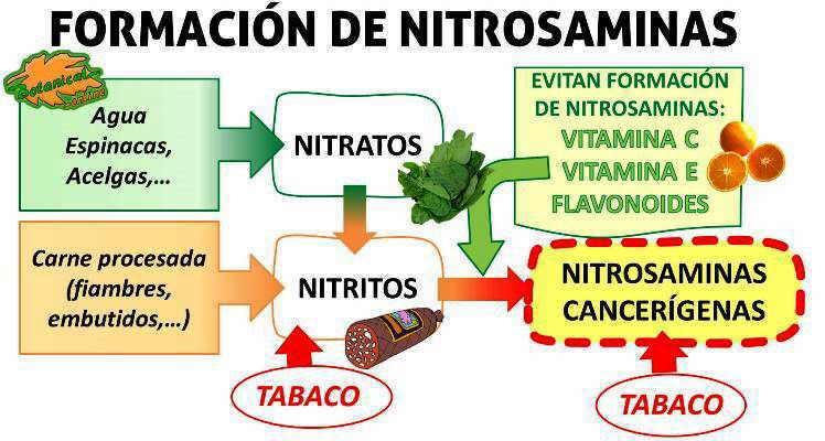 Alimentos ricos en nitratos - Alimentos que evitan el cancer ...