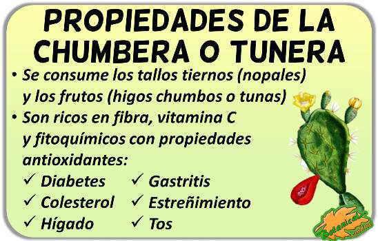 propiedades medicinales del nopal nopalito y los frutos tuna o higos chumbos, planta opuntia beneficios