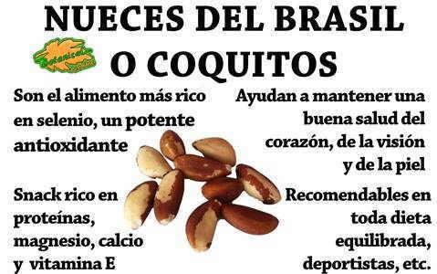 Propiedades de las nueces del Brasil o coquitos, beneficios