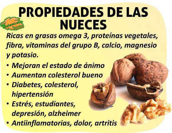 Propiedades De Las Nueces Botanical Online