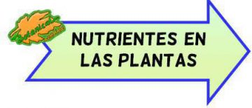 nutrientes plantas