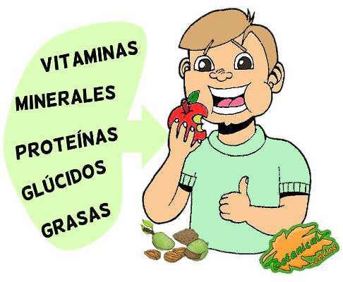 nutrientes tipos