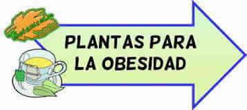 plantas para la obesidad