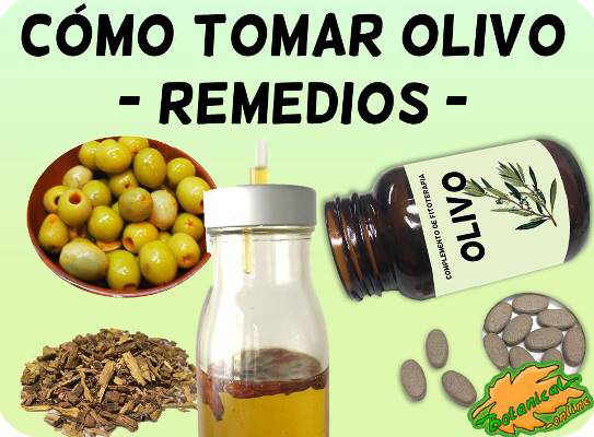 cómo tomar remedios con olivo