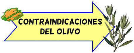 contraindicaciones del olivo