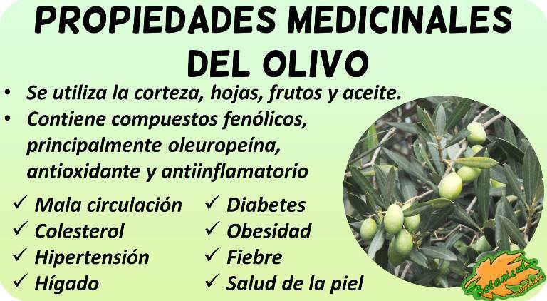 Beneficios y propiedades medicinales curativas del olivo en remedios naturales