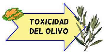 toxicidad del olivo