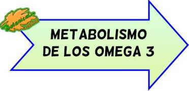 metabolismo omega 3