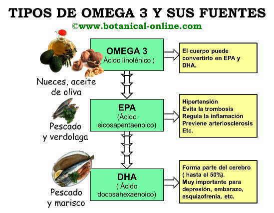 Tipos de omega 3 ALA, EPA, DHA, y sus fuentes