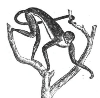 Adaptaciones de los primates