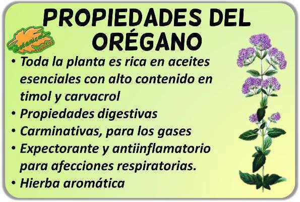 Propiedades medicinales del orégano y sus beneficios