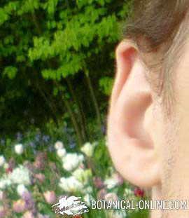 oreja otitis niños