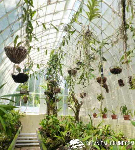 orquideas invernadero jardin botanico