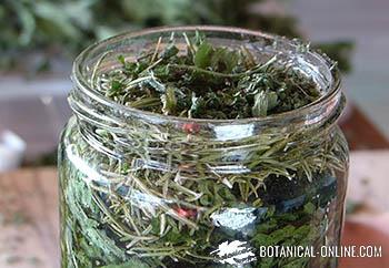 Remedio Extracto Casero De Ortiga Y Romero Para Caída Del Cabello Botanical Online