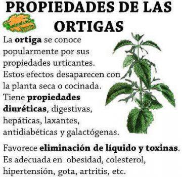 Propiedades de la ortiga, planta medicinal