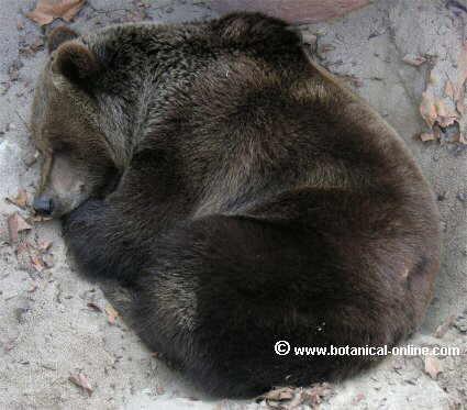 Worksheet. Animales que hibernan