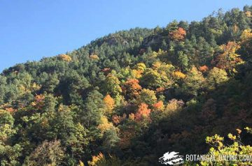 otoño paisaje