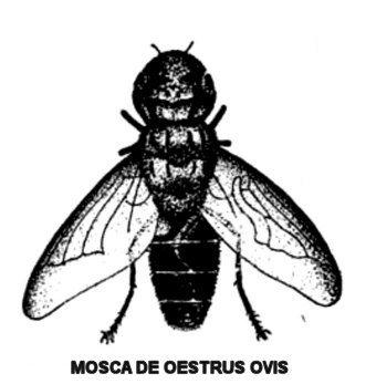 oeewstrus-oviis