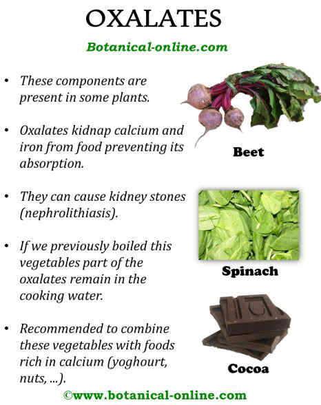 Oxalate Content In Foods List Food