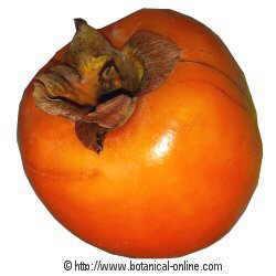 Fruto de caqui